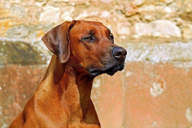 cette assurance pour un chien de catégorie 2